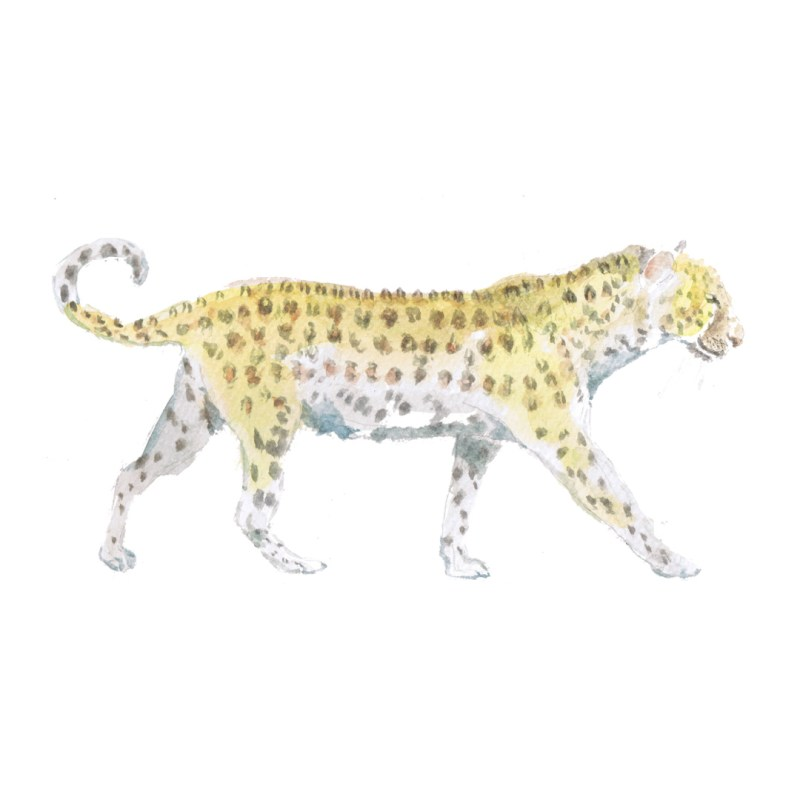 Leopard watercolour illustration