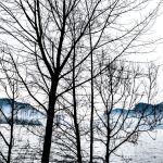 Mondsee View