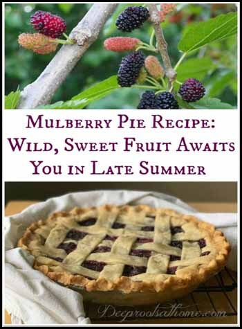 Mulberry Pie Blogger's Pit Stop #237