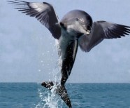 flying-dolphin-copy