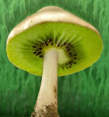 kiwi-mushroom-copy