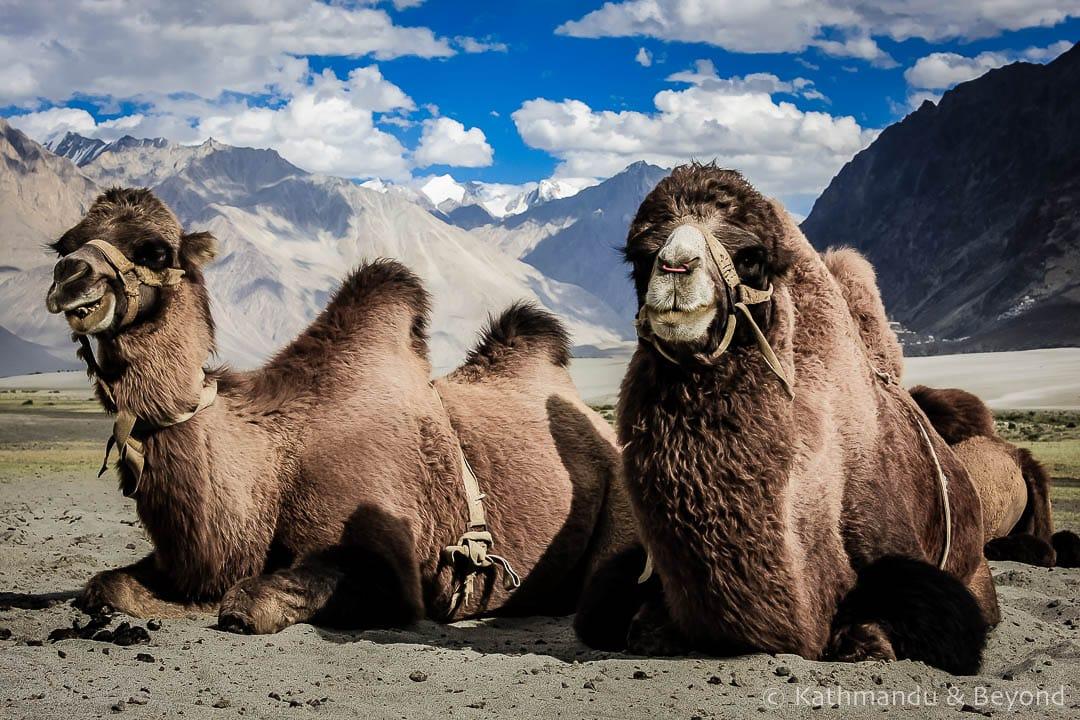 Nubra Valley Ladakh India 19-Edit 2