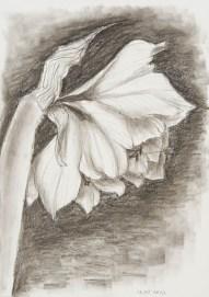 Graphit und Kohle auf Papier • 21 x 29,7 cm