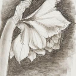 Bleistift und Kohle auf Papier • 21 x 29,7 cm