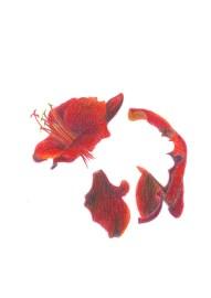 Buntstift auf Papier • 21 x 29,7 cm