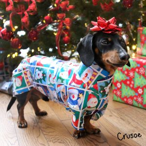 Dog wrapped in Christmas paper