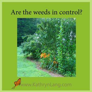 Weeds in control of the garden