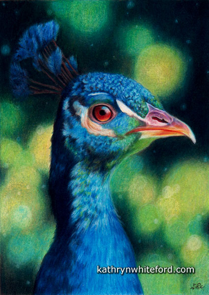 """""""Peacock"""" Coloured pencils on watercolour paper, 5x7 inches"""