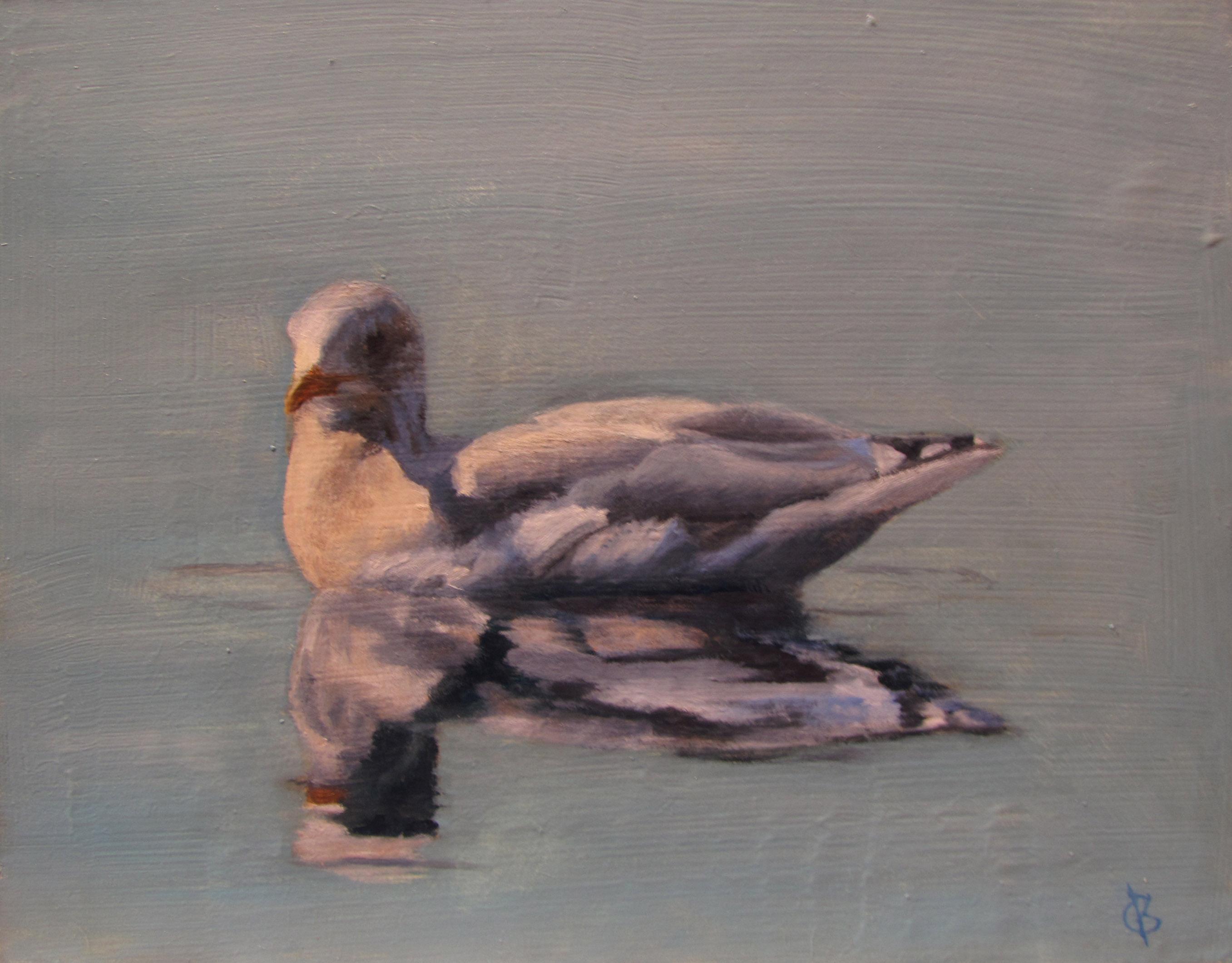Algonquin Gull