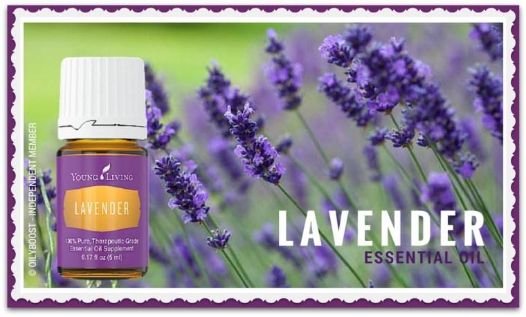 lavendercroppededgy