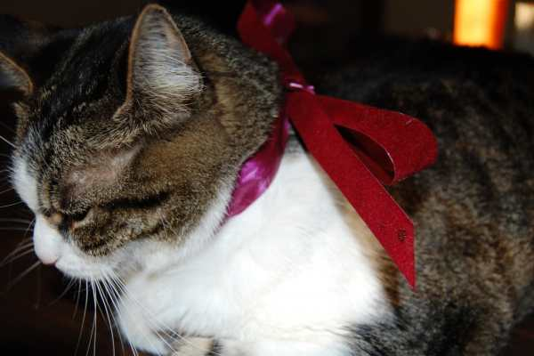 Spud Wearing A Bow on Katie Crafts; https://www.katiecrafts.com