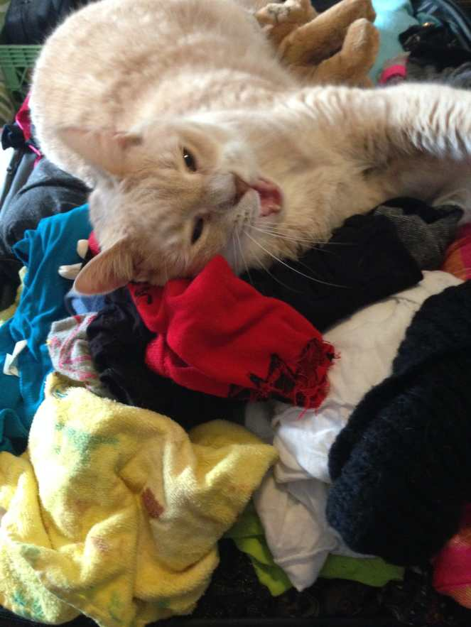 Lucky Loves Laundry on Katie Crafts; http://www.katiecrafts.com