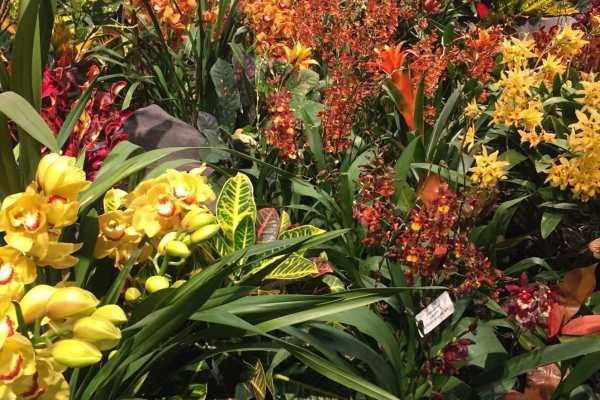 2016 Philly Flower Show Recap on Katie Crafts; https://www.katiecrafts.com