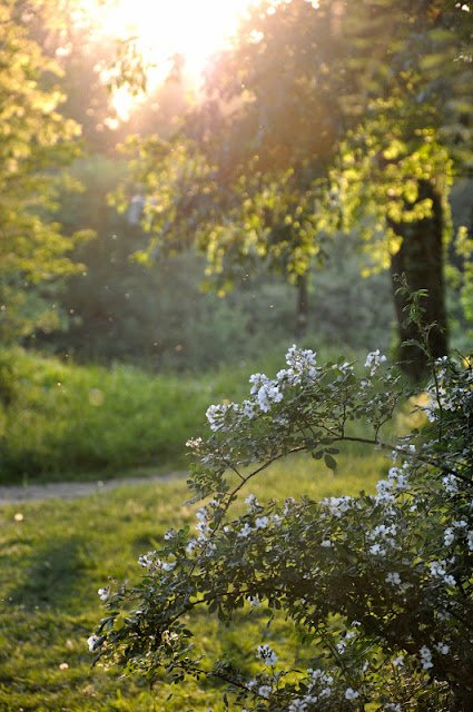 Golden hour trees and flower bush by Katie M. Reid Photography
