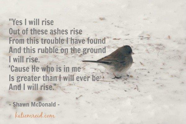 I Will Rise Lyrics by Shawn McDonald image