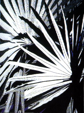 Black and White Palms - Katiepm