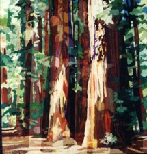 Redwood Forest - Katiepm