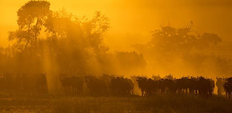 ndutu migration safari