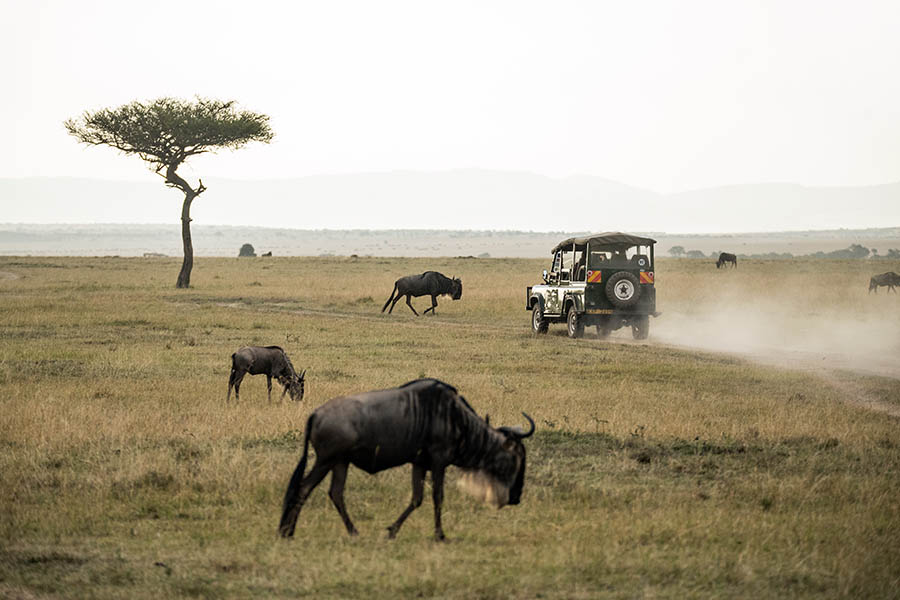 Wildbeest in Serengeti
