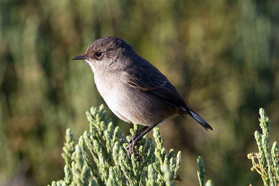 Bird at Kilimanjaro forest