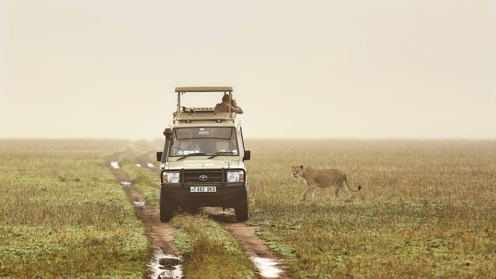 Tanzania Luxury Private Safari, Drive Far Away