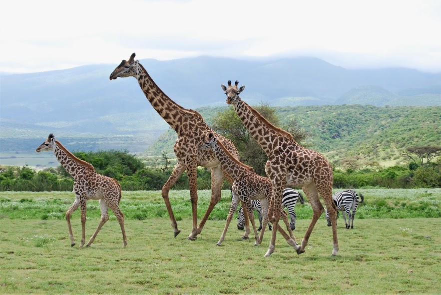 Tanzania Unforgettable Expereince
