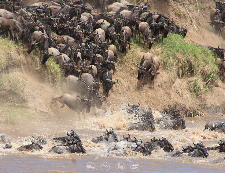 Migration safaris