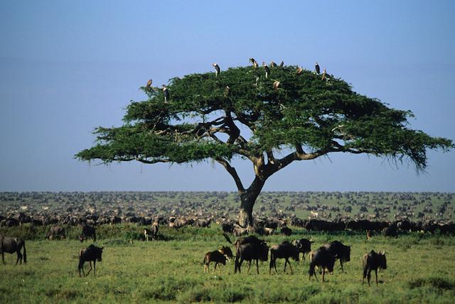 Photographic Safari in Serengeti