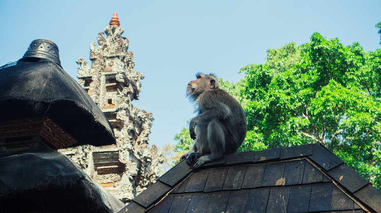 Survival guide for the Ubud Monkey Forest in Bali
