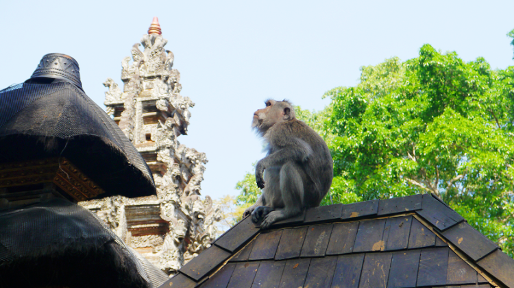 How to survive the Ubud Monkey Forest in Bali
