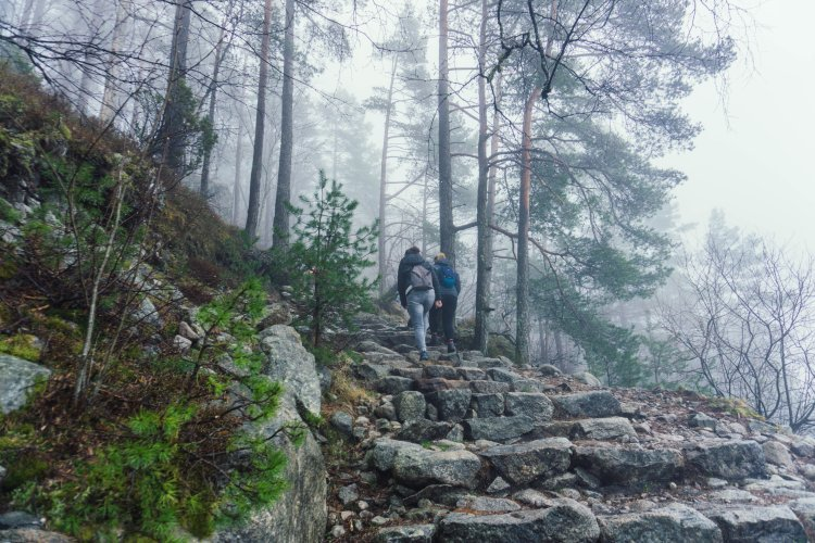 Image of people walking up stone stairs with trees in the fog at the start of the Pulpit Rock hike in Norway