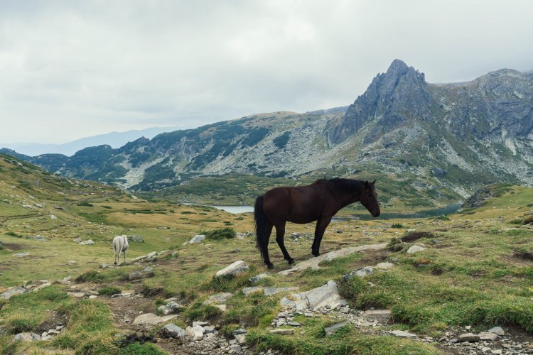 Horses on the trail during 7 Rila Lakes hike in Bulgaria