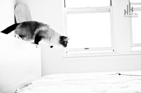 Achilles-Dancing-Cat-7