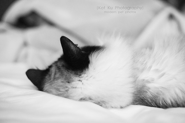 Every-day-is-a-lazy-sunday_02