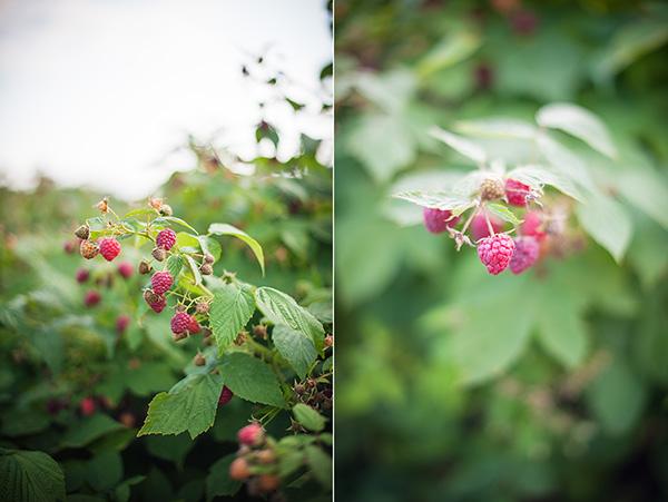 Kat Ku - Raspberries