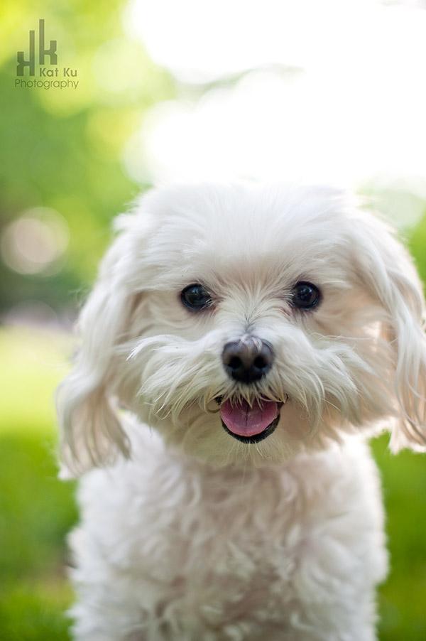 Kat-Ku_UMichigan-Pets_Roni_01