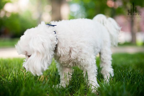 Kat-Ku_UMichigan-Pets_Roni_03