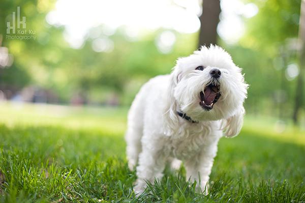 Kat-Ku_UMichigan-Pets_Roni_04