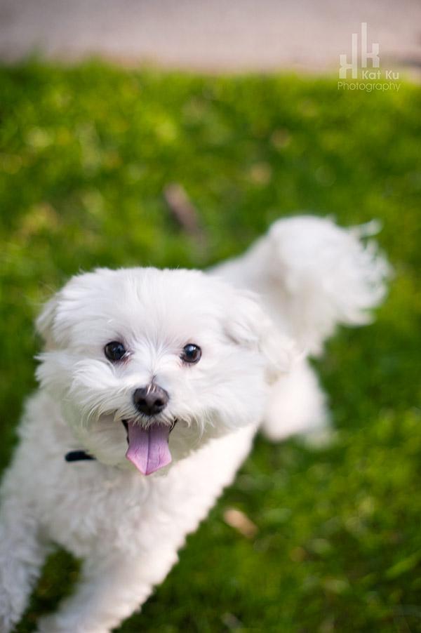 Kat-Ku_UMichigan-Pets_Roni_06