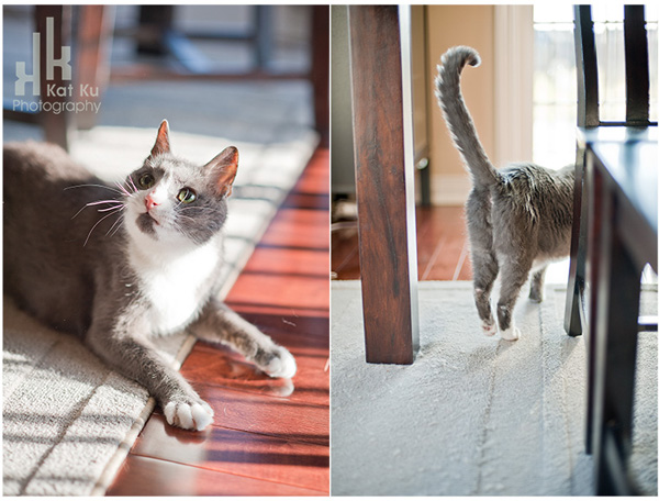 Kitty-Diptych-1
