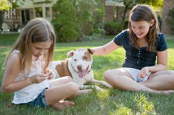 Michigan-Pet-Photography_Mellow-the-Pitbull_-10