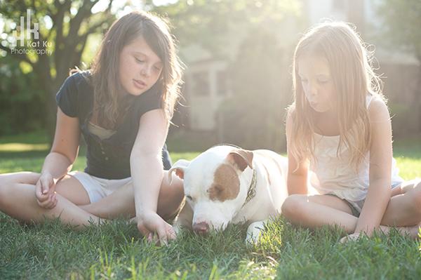 Michigan-Pet-Photography_Mellow-the-Pitbull_-11
