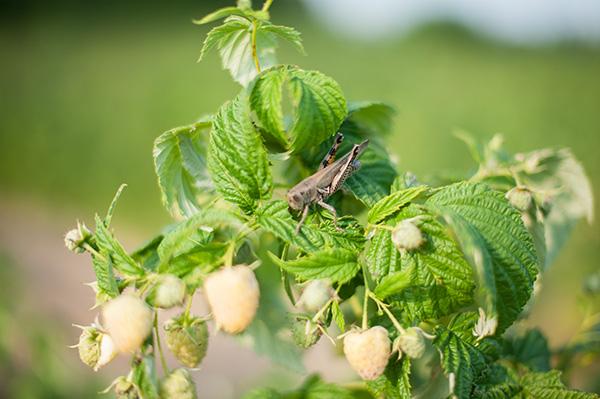 Pure Michigan_Kat Ku_Makielski Berry Farm_11