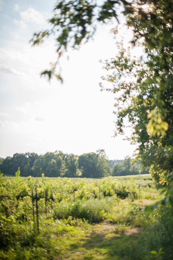 Pure Michigan_Kat Ku_Makielski Berry Farm_16