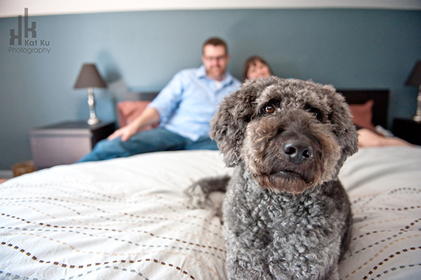 Ellie-the-Gray-Labradoodle_16