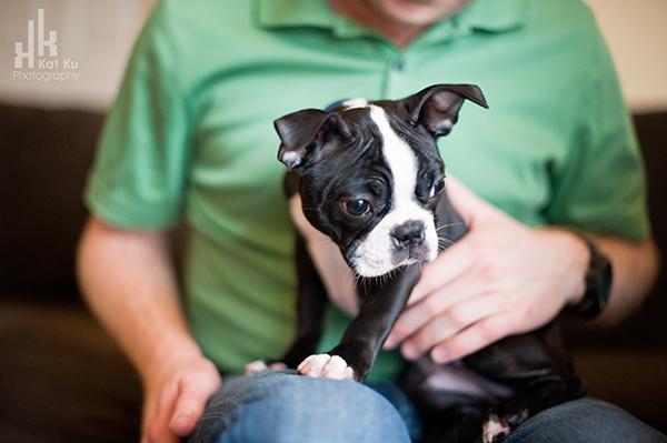Kat-Ku-Photography_Boston-Terrier-Puppy08