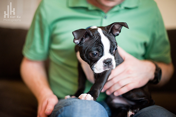 Kat-Ku-Photography_Boston-Terrier-Puppy08