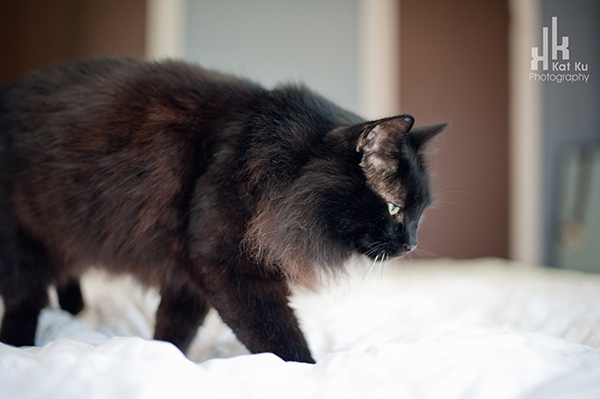 Aladdin_Modern-Cat-Photography_11