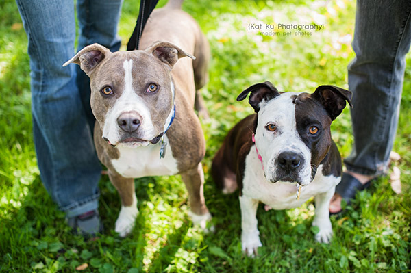 Kat Ku Photography_Bane and Raven_Pit Bull_03