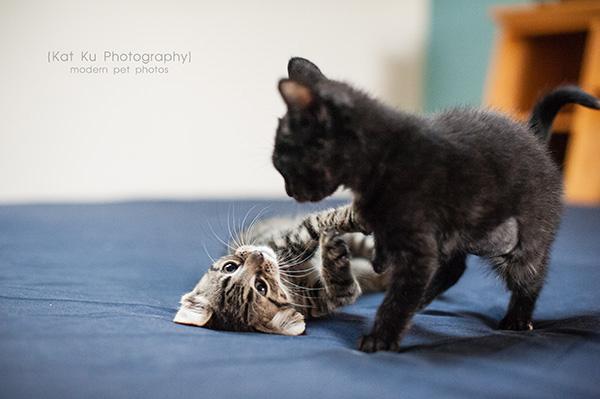 Adoptable Kittens_19
